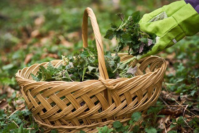 Workshop: Eetbare Planten