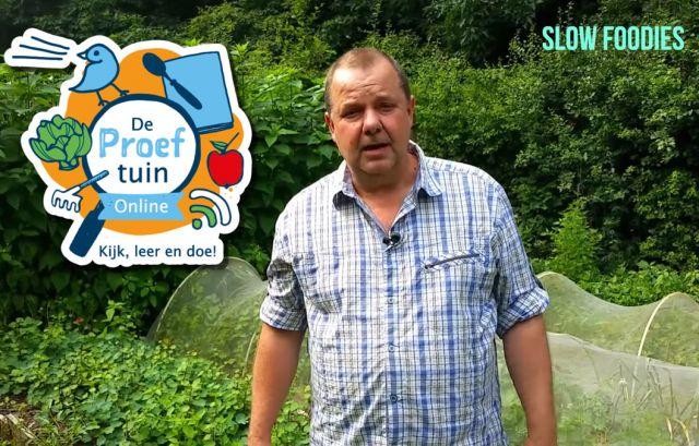 De Proeftuin Online: Onbekende, nieuwe en vergeten groenten