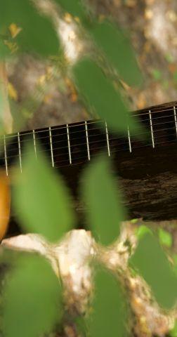 En eeuwig zingen de bossen