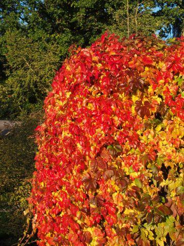 Heerlijke herfst op 22 oktober
