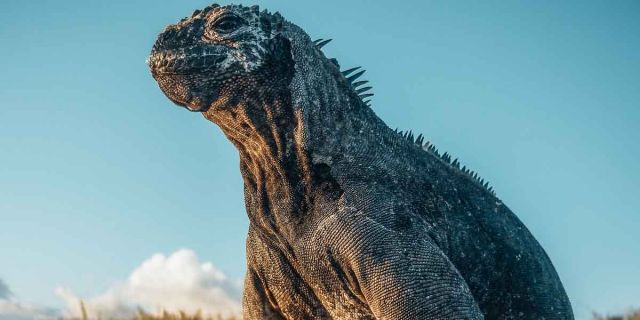 Film Nijkerk: Galapagos: Hope for the Future