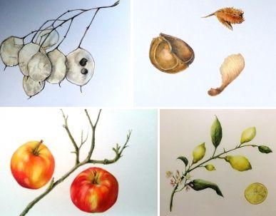 Cursus   Botanisch tekenen