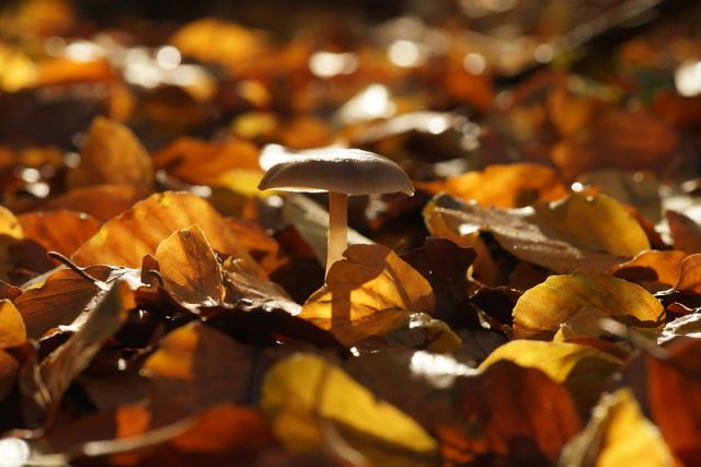 Herfst - Een collectie prentenboeken