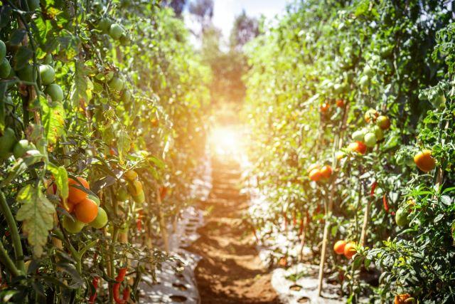 De Proeftuin Online - Smullen uit de (voedsel)bostuin