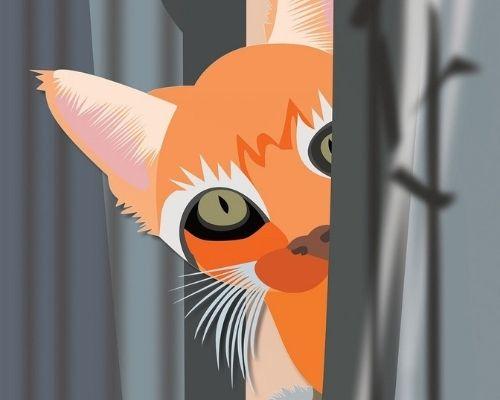 Online escaperoom met de kat Ziezo