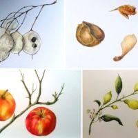 Cursus | Botanisch tekenen