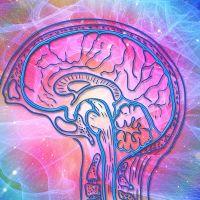 Slaap en de Hersenen