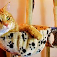 kids-online: Alles over... kattenspeeltjes