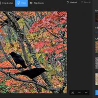 Internetcafé - Wat kan je met de app Foto's in Windows 10?