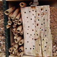 Bouw je eigen insectenhotel (9-12 jaar) Eerbeek