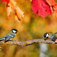 Poëziemiddag: Herfst