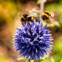 Rondleiding 'Zonder bijen zijn we nergens'