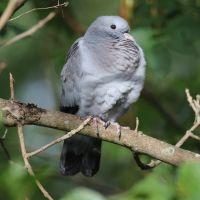 Rondleiding 'Feest voor vogelaars'