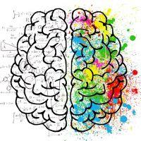 Seniorencollege - Hoofdzaken, een kijkje in de hersenen? 30-09-2021 14:00