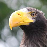 Lezing - Vogels in een veranderende wereld